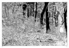Манга Скитания Эманон. Том 2. изображение 2
