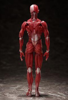 Фигурка figma Human Anatomical Model изображение 1