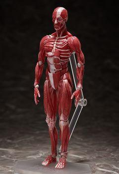 Фигурка figma Human Anatomical Model производитель FREEing