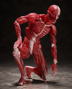 Фигурка figma Human Anatomical Model изображение 3