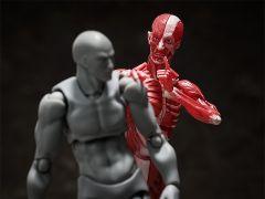 Фигурка figma Human Anatomical Model изображение 6
