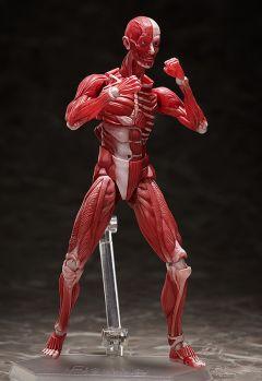 Фигурка figma Human Anatomical Model изображение 5