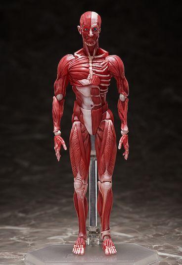 figma Human Anatomical Model фигурка