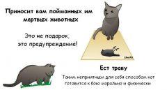 Комикс Как распознать, что твой кот решил тебя прикончить. жанр Комедия и Повседневность